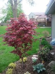 Small Shrubs For Front Yard - 58 best small landscaping trees u0026 shrubs images on pinterest