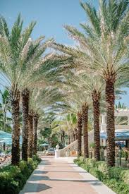 595 best palm trees images on pinterest