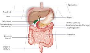 bauchspeicheldrüsenschwäche symptome bauchspeicheldrüsenkrebs risikofaktoren vorbeugung