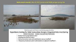 alternative monitoring approaches for large bay delta estuarine