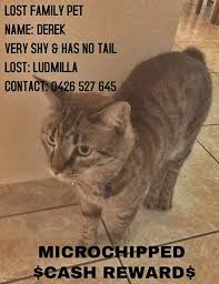 Missing Cat Meme - cats lost top end lost and found