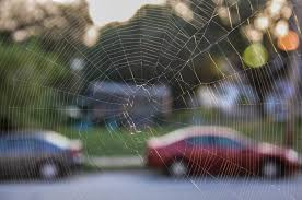 Are Spiders Attracted To Light How To Get Rid Of Spider Webs And Keep Spiders Away Terminix
