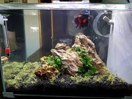 17 best aquarium plants images on aquariums tropical