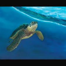 marine life art gallery blue water art by guy lefebvre