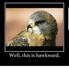 Hawkward Meme - well this is hawkward this meme on me me