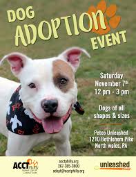 petco black friday november adoption pricing and events acct philly