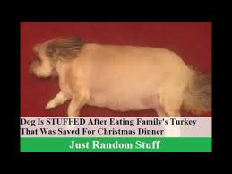 is stuffed after family s turkey that was saved for