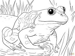 coloring pages coloring page of frog frogs pages within coloring