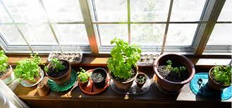 indoors garden 20 website to visit if you want a better indoor garden