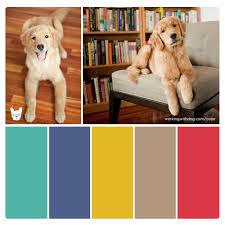 color palettes for pet brands