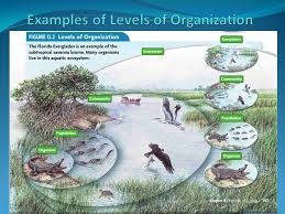 levels of organization ecology the study of interactions between
