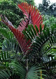 traveler palm u2026 pinteres u2026