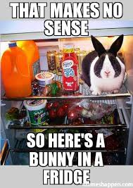 Fridge Meme - that makes no sense so here s a bunny in a fridge meme custom