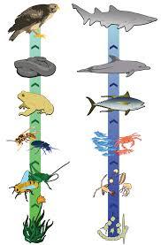 make a food chain ribbon great idea pinterest food