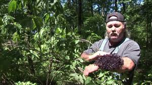 plants native to arkansas flowers and herbs of mountain creek arkansas 4 5 youtube