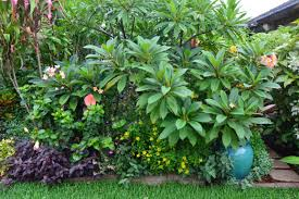 tropical breeze is a sydney tropical garden filled with a wide