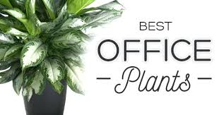 best plant for office best plants for office the best indoor plants good plants for