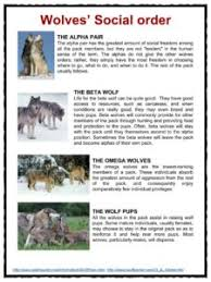wolf facts worksheets u0026 habitat information for kids