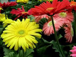 Flower Companies Fresh Flower Manufacturers Fresh Flower Suppliers Fresh Flower