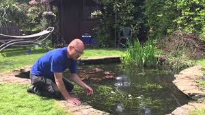 oxygenating pond plants for small ponds youtube