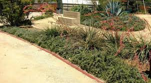 here u0027s a free resource to help create drought tolerant water wise