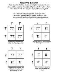 easy punnett square worksheet free worksheets library  download  with easy punnett square worksheet photos  pigmu from comprareninternetnet
