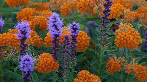 Shade Of Orange Names What Color Is Produced When You Mix Purple And Orange Reference Com