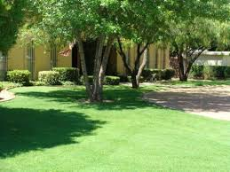 weed control el paso tx delta pest control u0026 lawn service