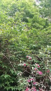 Botanical Gardens Ubc by White Flowering Tree Shrub From Ubc Botanical Garden Ubc