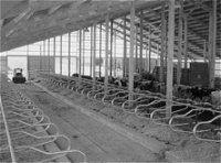 Cattle Barns Designs Beef Cattle Housing U0026 Equipment Center For Agriculture Food And