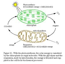 Photosynthesis And Cellular Respiration Worksheet Biology Unit 3 Photosynthesis And Cellular Respiration