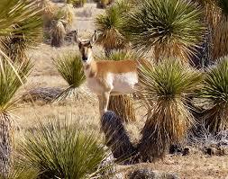 native desert plants otero mesa wikipedia