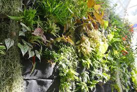 best plants for vertical gardens solidaria garden