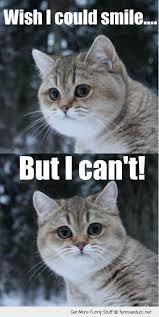 So Cute Meme - omg so cute memes pinterest rage comics memes and funny