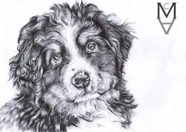 puppy biro drawing bernese mountain dog by sarah mca art on