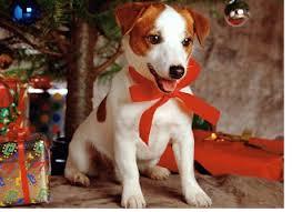 black friday petsmart free pet christmas stocking at petsmart 11 28 only
