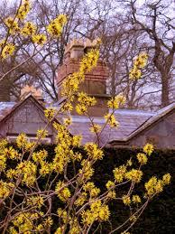 plants that flower in winter hgtv