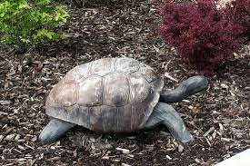 tortoise statue picture of springhill suites lehi at