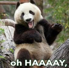 Panda Meme - 20 incredibly cute and funny panda memes sayingimages com