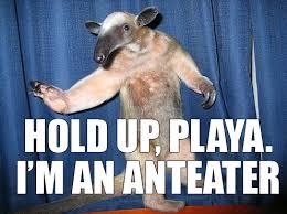 Anteater Meme - i m an anteater image macros