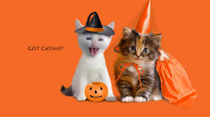 best halloween backgrounds wallpapers funny halloween