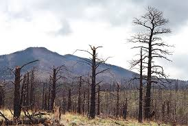 Trees Worldwide Large Trees Key Climate Influencers Die In Drought