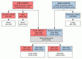 fetal circulation made easy epomedicine for schematic diagram of