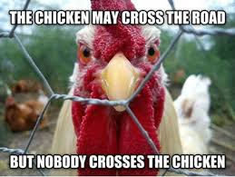 Funny Chicken Memes - best 25 funny chicken pictures ideas on pinterest cute pictures