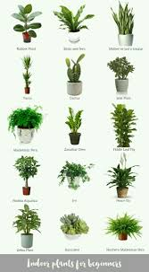 low light houseplants plants that don t require much light pin by yuliastini on gardening pinterest gardens