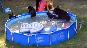 nj black bear pool party wplj fm cumulus