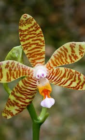 Orchids Facts by 1128 Best Flowers Orchids Or Aliens Images On Pinterest Plants