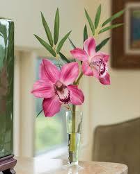 cymbidium orchid cymbidium silk orchid bamboo arrangement at petals
