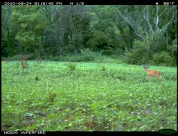 recon native plants food plots hunting advice and tips for serious deer and turkey