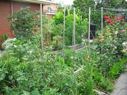 My Garden Deep Green Permaculture - Backyard permaculture design